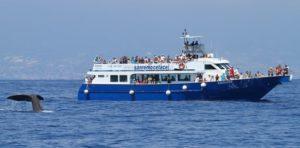 WhaleWhatch per Villa Lazzarini Holidays house